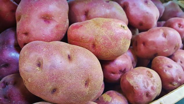 Cartofi roșii România