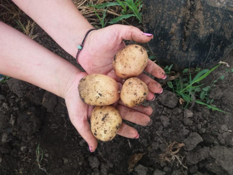 Cartofi noi Legume Fructe Martin