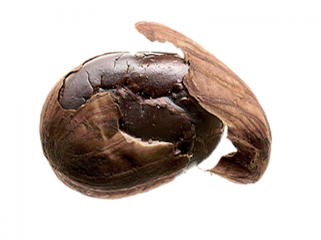 Cacao boabe
