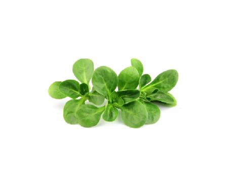 Salată Valeriană Italia