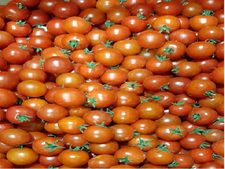 Rosii cherry Coop. Agricola Ialomiteana