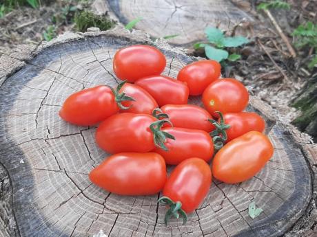Roșii cherry Legume Fructe Martin
